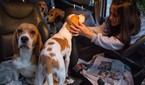 Polícia tentará recuperar 178 cães levados por ativistas