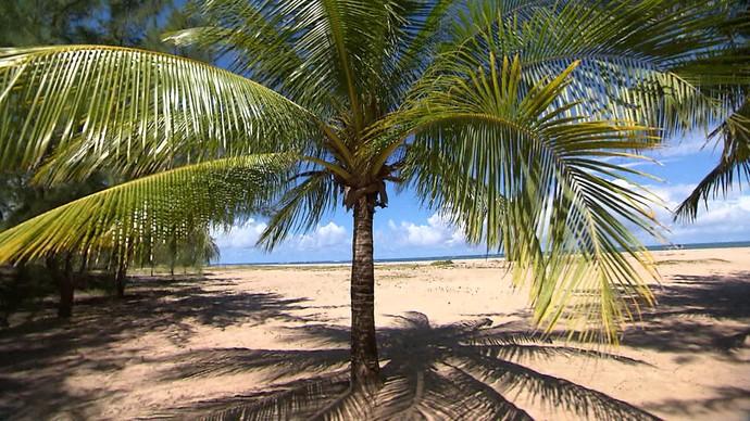 Praia dos Garcez, no Litoral Sul da Bahia, é opção para amantes da natureza (Foto: TV Bahia)