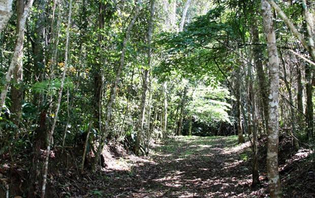 Mogi das Cruzes tem reservas ambientais certificadas ()
