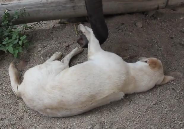 Elefante tentou acordar cachorro de todas as maneiras, mas não conseguiu (Foto: Reprodução/LiveLeak/plokiju )