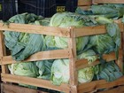 Ceasa Uberlândia registra queda nos preços de hortifrútis