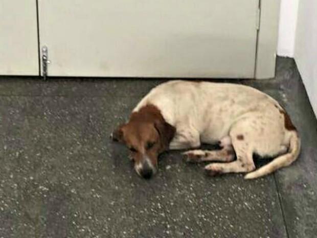 Cachorrinho passou uma semana esperando o dono na UPA do Pascoal Ramos (Foto: Divulgação/Radar Animal Cuaibá)