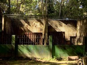 Reparos iniciaram pelos logradouros das onças  (Foto: Reprodução/Rede Amazônica)