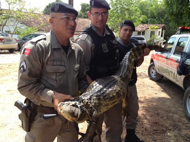 Jacaré foi capturado dentro de uma granja, no bairro de Água Fria, em João Pessoa (Foto: Walter Paparazzo/G1)