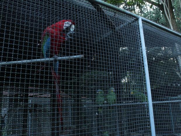 Aves silvestres e outros tipos de animais são reabilitados pelo Cetas (Foto: Natália Souza/G1)