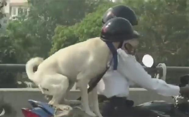De capacete, cão foi flagrado andando de carona em moto  (Foto: Reprodução/YouTube/Sumit Mehra)