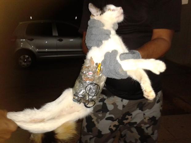 Agentes penitenciários apreendem gato com serras e celular entrando em presídio de Arapiraca (AL). Todo o material estava preso ao animal com fitas adesivas. A captura aconteceu na noite do último dia 30. (Foto: Divulgação/Superintendência Geral do Sistema Penitenciário de Alagoas)