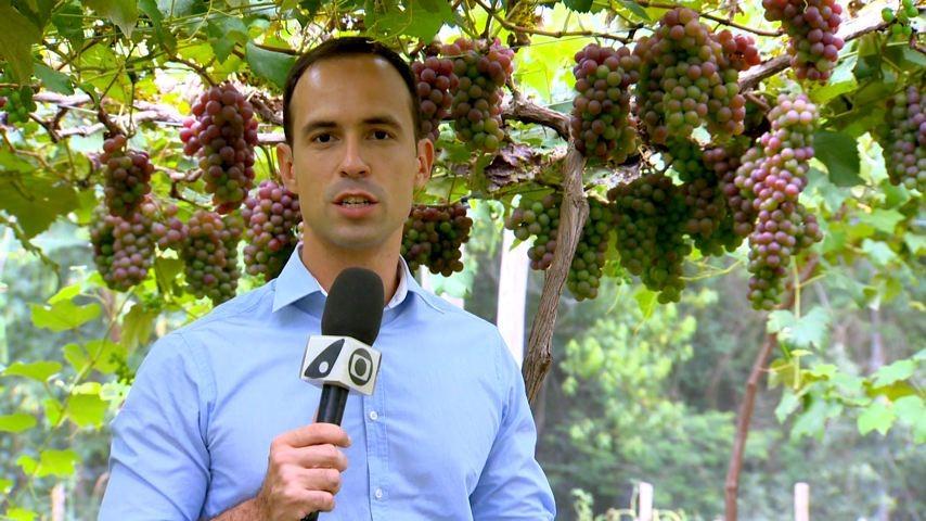 Fábio Linhares vai até Domingos Martins conferir a produção de uva e morango (Foto: Divulgação/ TV Gazeta)