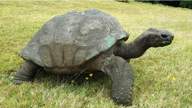Tartaruga teria nascido em 1832 (Fot BBC)