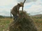 Seca provoca perda de 90% da safra de feijão em Feira de Santana, BA