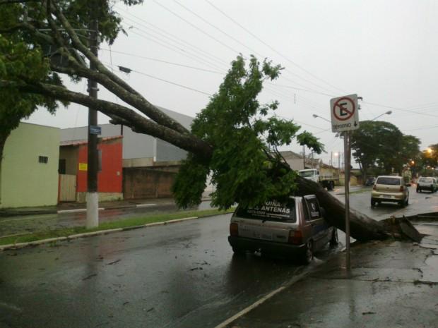 Prefeitura foi acionada para auxiliar na remoção da árvore. (Foto: Jamie Rafael / TV TEM)