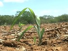 Seca preocupa agricultores do sertão de PE e do RN