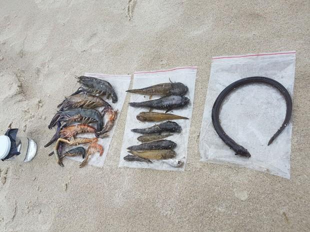 Animais marinhos morreram com a contaminação (Foto: Divulgação/Polícia Ambiental)