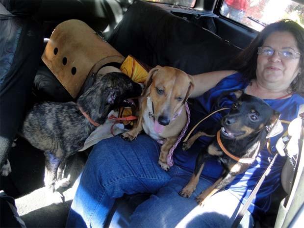 Dona de casa levou de carro sete cães para serem castrados (Foto: Eduardo Guidini/ G1)
