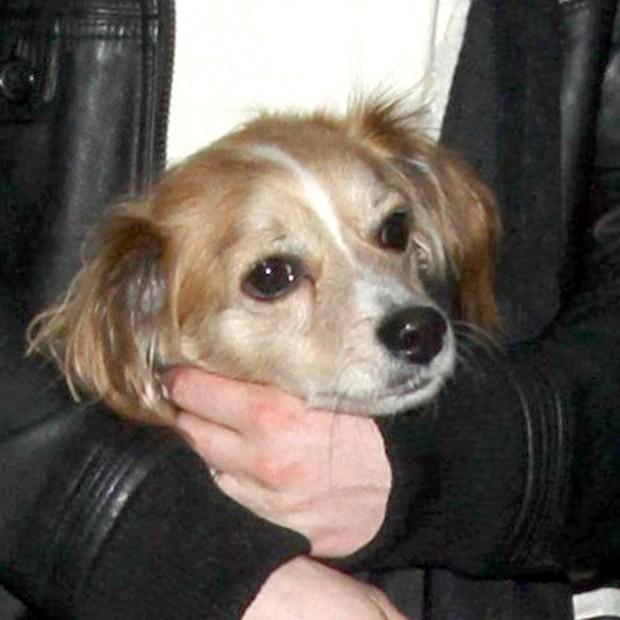 O cachorrinho Kenobi (Foto: AKM-GSI)