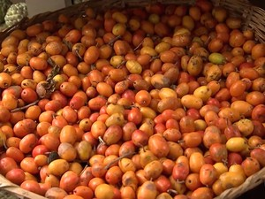 Seriguela Bahia (Foto: Reprodução/ TV Bahia)