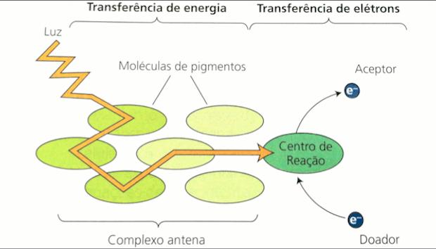 Esquema com princípio dos fotossistemas (Foto: Colégio Qi/Reprodução)