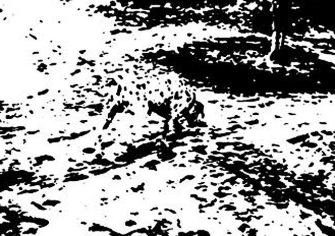 Ilusões mostram capacidade de adaptação do cérebro, segundo especialista   veja se você consegue  decifrar  as imagens. e42be4c016