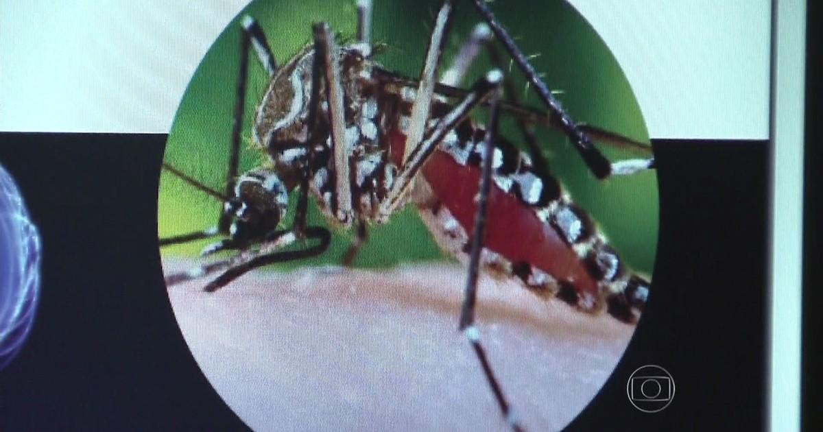 Brasil tem 337 casos de chikungunya, segundo Ministério da Saúde