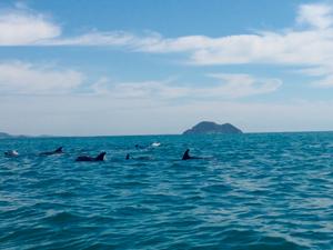 Golfinhos aparecem em praia de Búzios (Foto: Marianna Faria/Arquivo Pessoal)