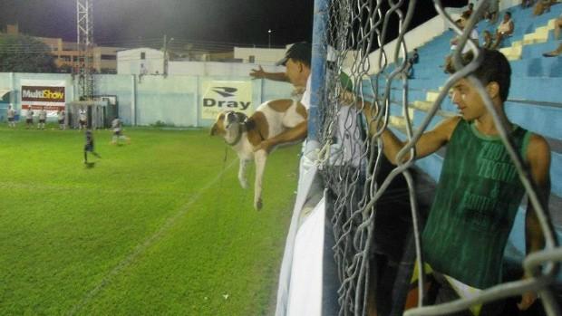 Cachorro entre os torcedores no jogo São Mateus x Desportiva (Foto: Divulgação/AASM)