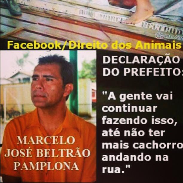 Thaila Ayala posta sobre animais em seu Instagram (Foto: Instagram / Reprodução)