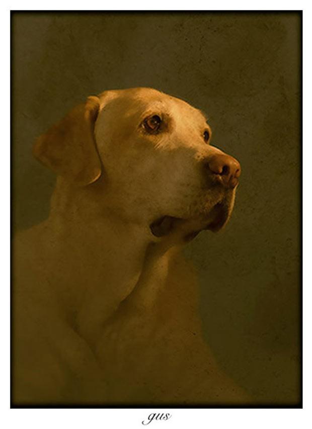 Andrew tira retratos de cachorros e outros animais há cinco anos. Ele sempre fotografa no local onde os cães passeiam, ou vivem, e junto com os donos. Desta forma foi feita a imagem de Gus (Foto: Andrew Pinkham)