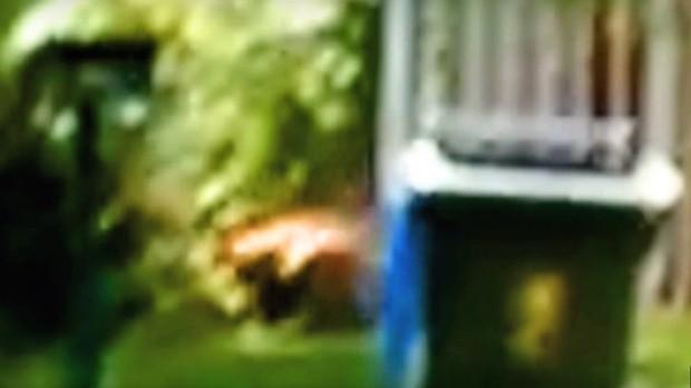 Um vídeo tem circulado como uma suposta prova de que o animal não está exinto (Foto: Reprodução)