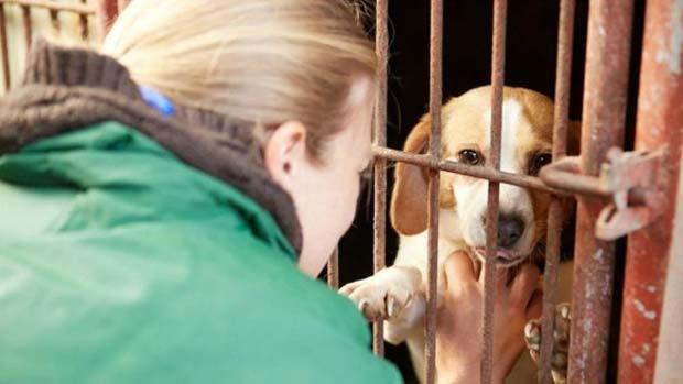Grupo de ativistas acredita que há maneiras de colocar fim ao consumo de carne canina  (Foto: Change For Animals Foundation)