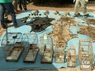 Polícia investiga tráfico internacional de animais silvestres em Curionópolis