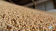 Aumenta o volume de soja esmagada em Mato Grosso