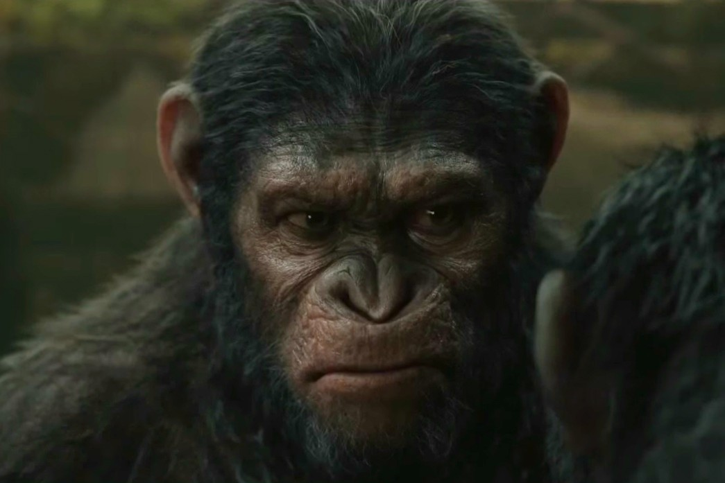 Planeta Dos Macacos o Confronto Wallpaper Novo 'planeta Dos Macacos'