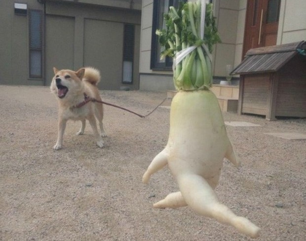 Planta 'passeia' com cachorro em foto publicada no Twitter (Foto: Reprodução)