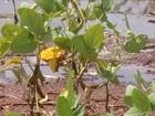 Excesso de chuva castiga produção de soja no Mato Grosso do Sul