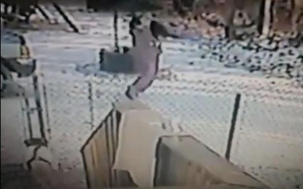 Americana foi atacada por gato de rua ao tentar defender o cachorro de sua mãe (Foto: Reprodução/YouTube/WJBK | FOX 2 News Detroit·)
