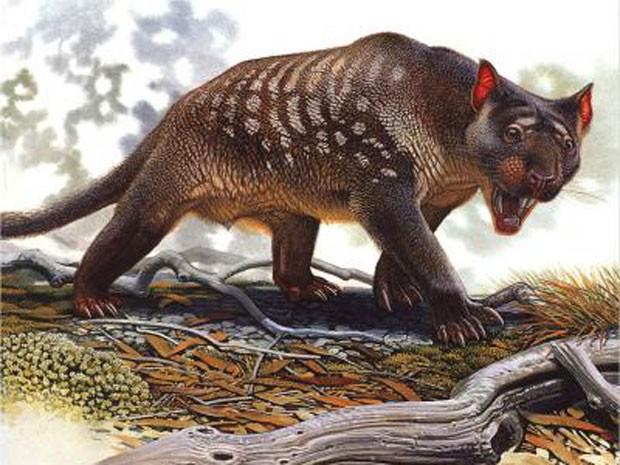 Desenho de um 'Thylacoleo carnifex', leão marsupial extinto (Foto: Peter Schouten/Divulgação )
