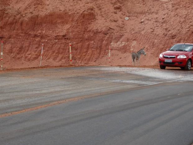 Segundo PRF, acidentes envolvendo animais eram constantes na rodovia (Foto: Divulgação/Gestão Ambiental da BR-235/BA)