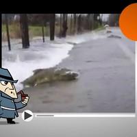 Detetive Virtual soluciona mistério do vídeo dos peixes que cruzam estrada