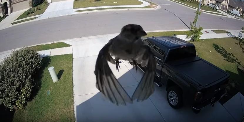 Pássaro levitando (Foto: Reprodução/ Screenshot/ Youtube)