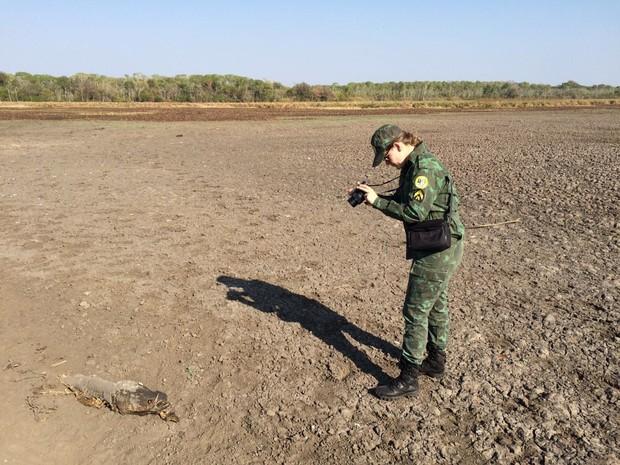 Agente registra carcaça de pirarucu na lama (Foto: Cassiano Rolim/TV Anhanguera)