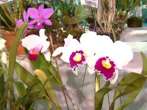 Exposição de orquídeas faz parte da programação da Festa do Clima (Foto: Reprodução EPTV)