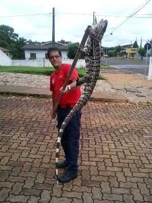 Lagarto foi solto em reserva ambiental (Foto: Divulgação/Defesa Civil)