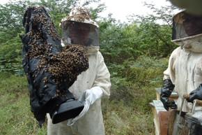Repórter cinematográfico é cercado por abelhas durante gravação (Foto: Globo Rural)