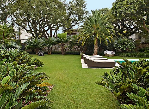 jardim fundo quintal : jardim fundo quintal:Jardim: em primeiro plano, maciços de zâmias. A grama esmeralda