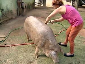 Sem recursos para pagar tratamento, família decidiu rifar porco no Espírito Santo (Foto: Reprodução/ TV Gazeta Norte)