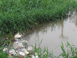 Imagem divulgada pelos pescadores de Ubatuba (Foto: Divulgação/Pescadores)