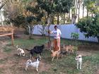 Animais de rua unem protetores e prefeitura pela causa em Porto Alegre