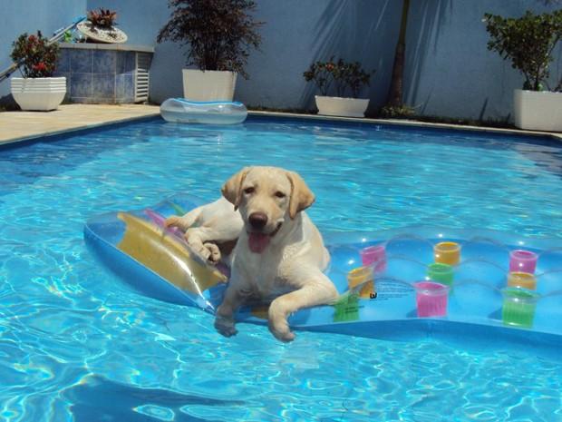 A labrador Nina gosta de dar mergulhos na piscina em dias de calor (Foto: Isabela Figueira de Andrade/VC no G1)