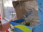 Com destino incerto, iguana enviada por Sedex é batizada de Ana Júlia