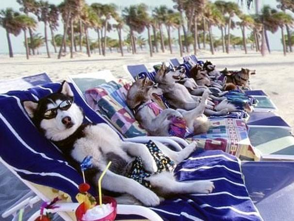Treinar os cachorros não será uma tarefa fácil (Foto: Divulgação / Reprodução)